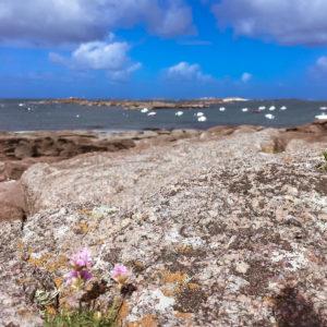 Vue sur l'île Milliau Trébeurden